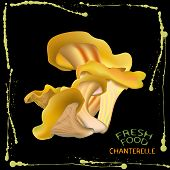 picture of chanterelle mushroom  - an illustration of a label of a bunch of chanterelle mushrooms on black background with yellow ink splashes on the edges and fresh food and chanterelle signs in the bottom left corner - JPG