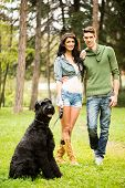 foto of schnauzer  - Young handsome heterosexual couple with a dog a black giant schnauzer walking through the park - JPG