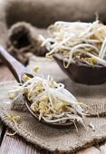 image of soybean sprouts  - Mungbean Sprouts  - JPG