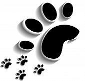 image of animal footprint  - Animal footprints on white background - JPG