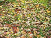 stock photo of bohemia  - Autumn leaf color - JPG