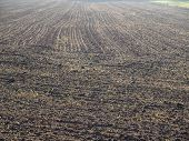 picture of bohemia  - fields sown in the autumn - JPG