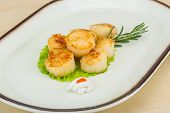 foto of scallops  - Grilled scallops in the bowl with herbs