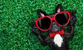 picture of rest-in-peace  - french bulldog dog lying on the grass with love peace and harmony finger wearing a red heart shape sunglasses - JPG
