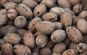 picture of pecan  - Pecans still in their shells the entire frame covered - JPG