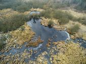 picture of swamps  - Aerial photography - JPG