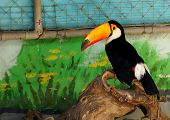 picture of toucan  - large Toucan in the Park - JPG