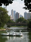 Chicagos skyline from Lincolm Memorial Park poster