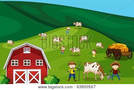 Farmers working in the farmland with cows
