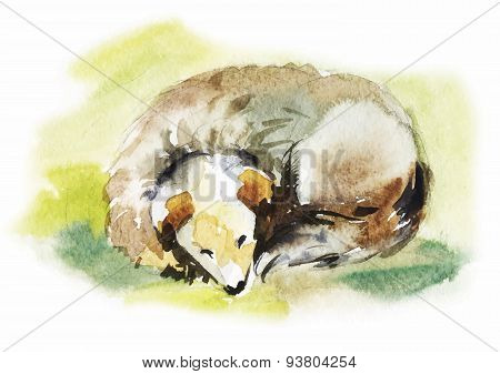 Watercolor dog sleeps. Hand-drawn illustration of mongrel