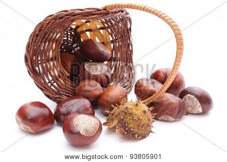 Overturned Wicker Basket With Chestnuts On White Background
