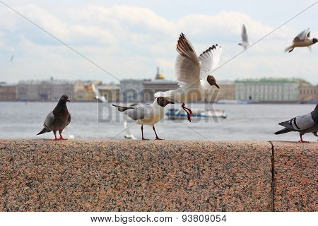 seagulls and pigeons on the granite embankment