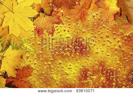 Autumn leaves frame with water drops