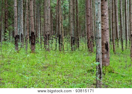 Trunks Of Trees In Green Forest