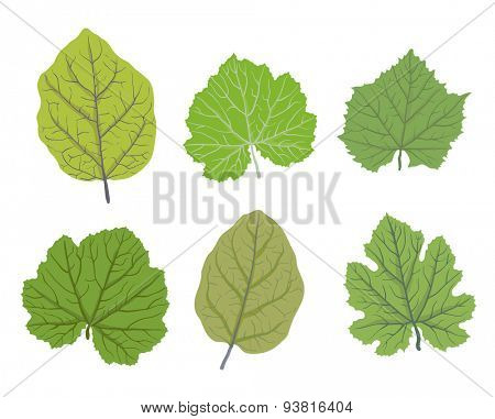 Set of green leaves of trees, isolated on white, vector illustration