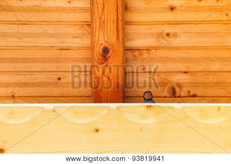 Swallow Bird Under A Wooden Shelter