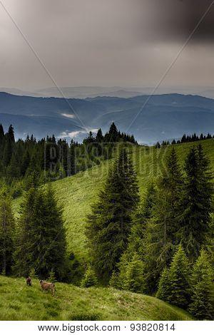 foggy hills. Bucegi mountaiin hills