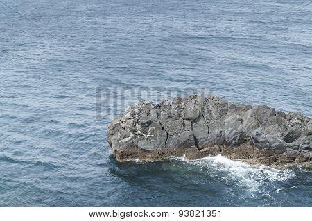 Train Rock In Southern Of Jeju Island