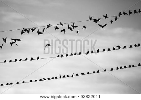 A flock takes off
