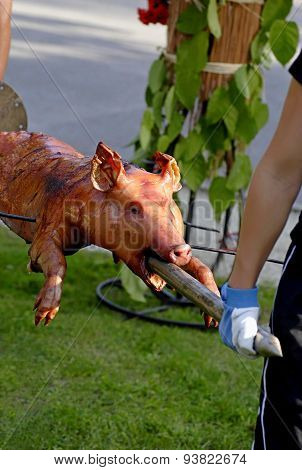 Roasted Piglet.