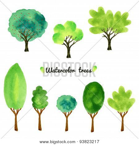 Watercolor style vector illustration of a collection of trees, shrubs, and grasses, isolated on whit