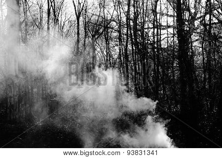 creepy bonfire smoke drifts through woods and trees