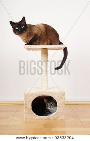 two cats on cat tower
