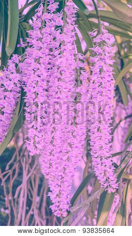Natural Sweet Color Orchid In Soft Color And Blur Style For Background