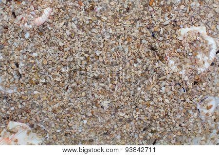 Texture seashell stones