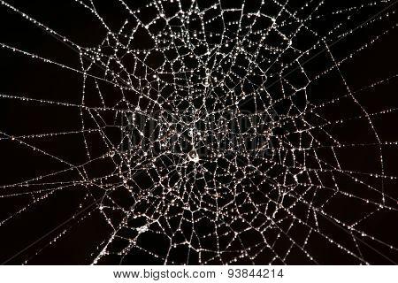 Cobweb isolated on black background