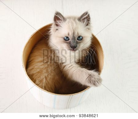 Cat in box  on light background
