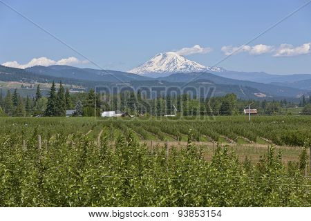 Mt. Adams And Hood River Valley Oregon.