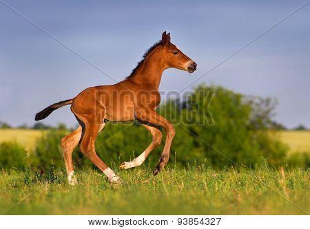 Bay colt run
