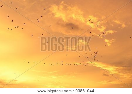 Silhouettes Of Flying Birds With Sunset Sky And Cloud