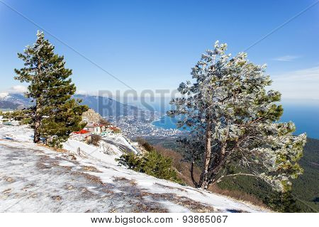 Panorama View Of Yalta Town From Ai-petri Mountain. Snow And Iced Pine Trees On Sunny Winter Day.cri