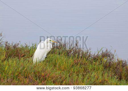 White beautiful crane in wetlands