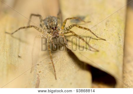 Close up of a kind of spider