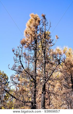 Effects of the Fire in a Forest