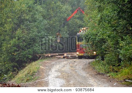 Loading A Timber Truck In The Forest