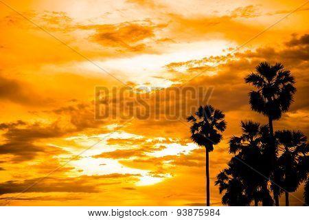 Sugar Palm With Sunrise Silhouette