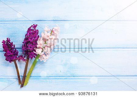 Fresh Flowers Hyacynths