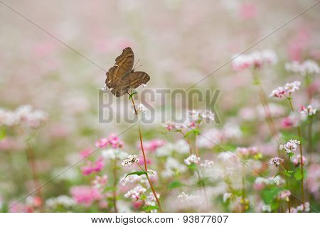 Buckwheat flower and butterfly