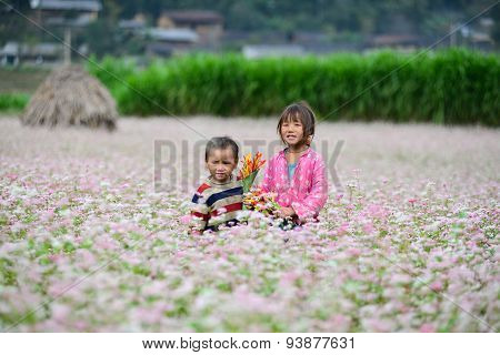 Two kids in a buckwheat (tam giac mach) flower field