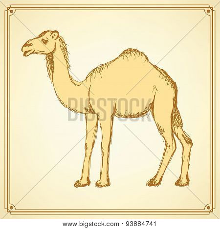 Sketch Cute Camel In Vintage Style