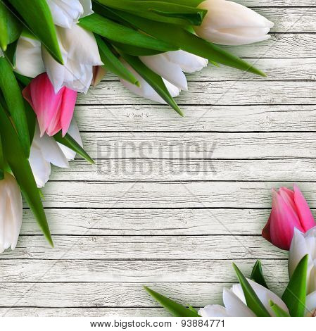 Pink And White Tulips Isolated Over White Wooden Background With Copy Space