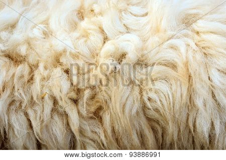 Close Up Wool Of Sheep In Farm