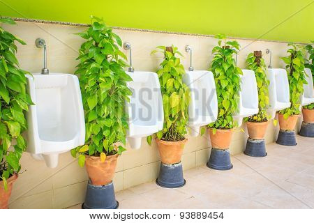 Men Toilet With Green Plant