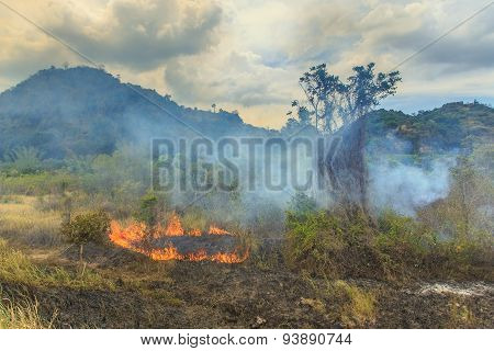 Fire In Forest Of Thailand