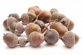 pic of acorn  - Stack of brown acorns isolated on white background - JPG