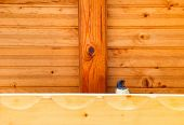 stock photo of swallow  - Image of Swallow bird under a wooden shelter - JPG